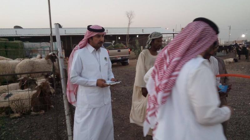 أسواق-ماشية-الرياض (2)
