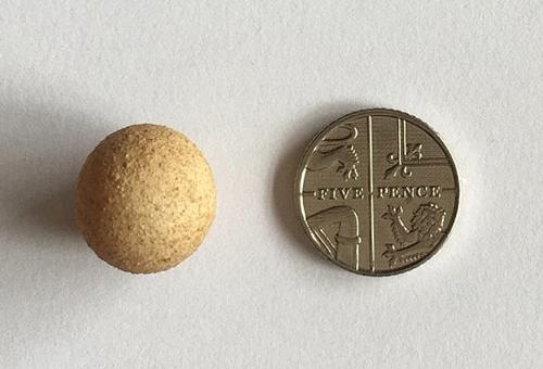 أصغر بيض في العالم1
