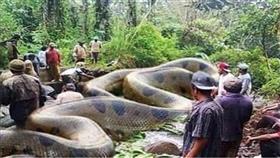 أضخم ثعبان في التاريخ بغابات الأمازون