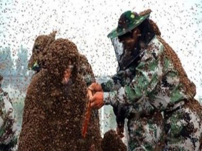 ألف نحلة تُطارد شاباً وتقتله (1)