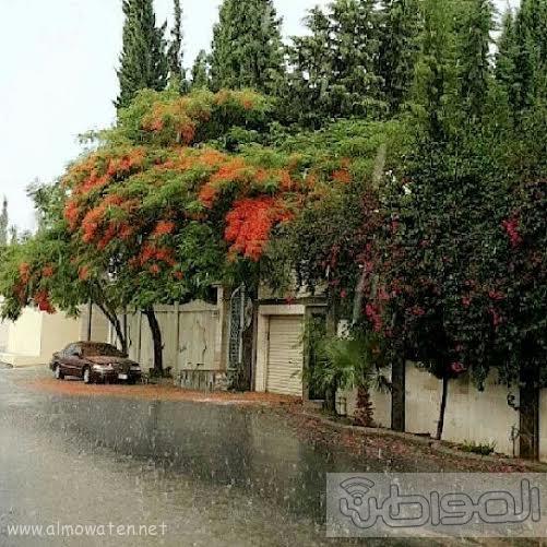أمطار الجمعة تكسو جبال أبها بالخضرة  (1)