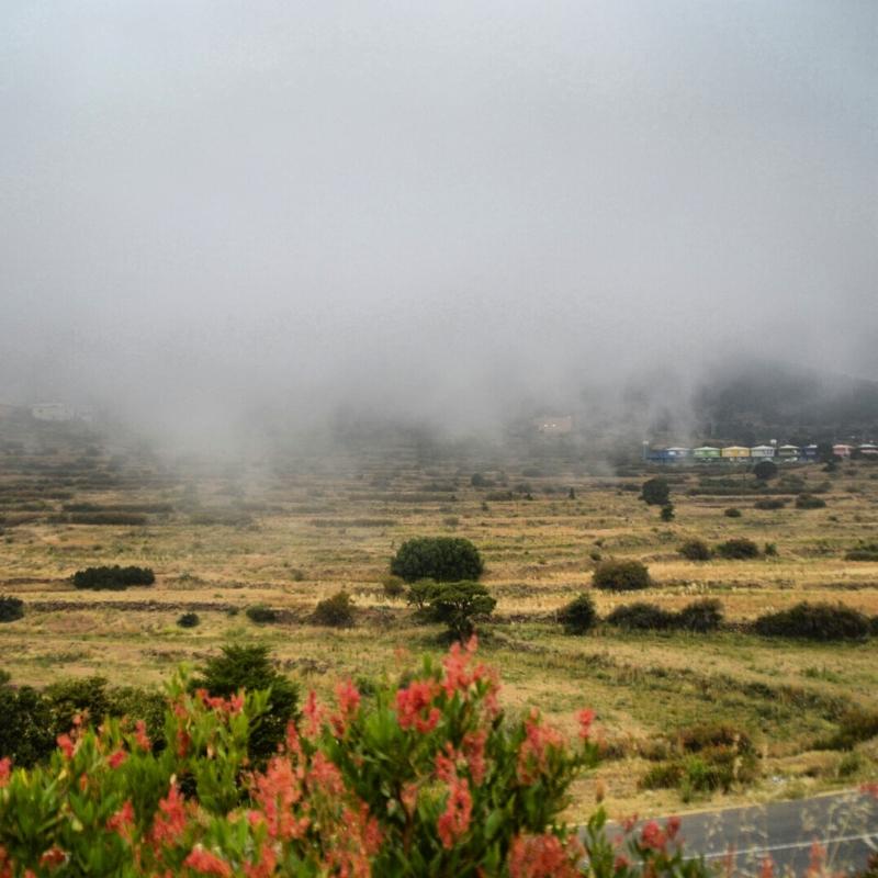أمطار عسير تكشف جمالها وتجذب الزوّار للمتنزهات (12)