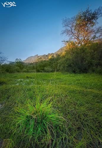 أودية وشلالات ومسطحات خضراء تنومه 8