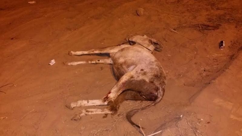 إصابة يمني وابنه ومقتل حمار بحادث دهس 3