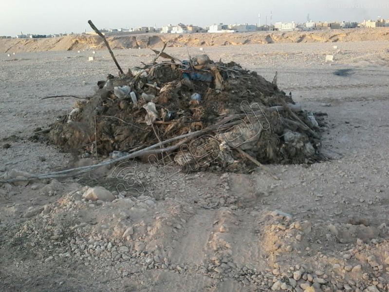 إلقاء مخلفات الأضاحي بمهدية-الرياض (4)