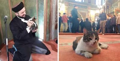 إمام يفتح أبواب المسجد للقطط الضالة