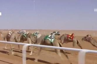 بالفيديو..اعتدال تفوز بأول أشواط مهرجان الملك عبدالعزيز للإبل - المواطن