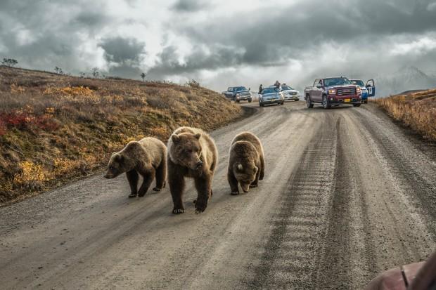 اجمل صور ملتقطة في يناير من مصوري ناشيونال جيوغرافيك (7)