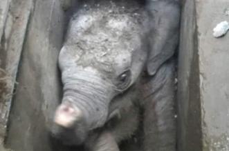 استخراج فيل سقط بحفرة مكشوفة في سريلانكا