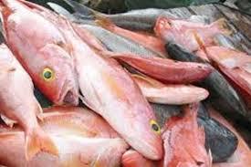 البيئة ترفع الحظر على استيراد الأسماك الحية من إيطاليا - المواطن