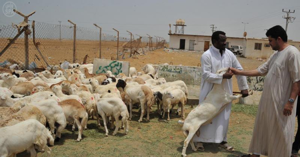 اسواق الماشية في جازان