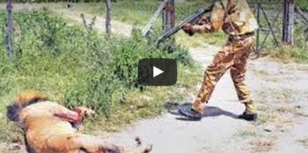 اعدام أسد في كينيا
