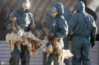 مذبحة طيور في كوريا الجنوبية بإعدام 23 ألف طائر - المواطن