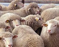 البيئة ترفع الحظر عن استيراد الحيوانات الحية من رومانيا - المواطن