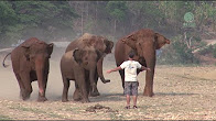 نفوق 200 فيل في شهرين! - المواطن