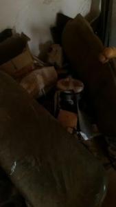 الإطاحة بعصابة من 7 أشخاص لسرقة سيارات في #بيش6