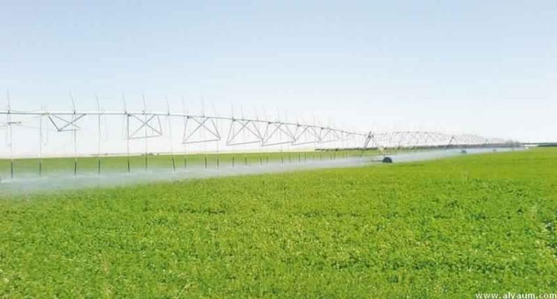 بالأرقام.. الأعلاف الخضراء تستهلك 3 أضعاف القطاع السكني والتجاري من المياه