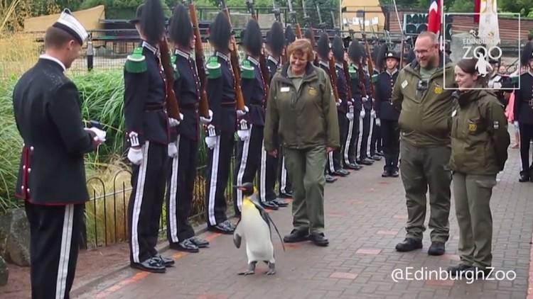 البطريق العميد