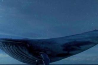 منها الاستيقاظ 4:20 فجرًا.. النمر يحذر من مهام لعبة الحوت الأزرق - المواطن
