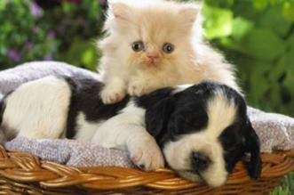 زراعة الخرج تدرب متطوعات لرعاية الحيوانات الأليفة - المواطن