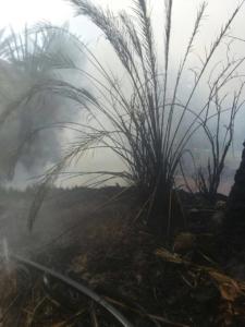 السيطرة على حريق مزرعتين بالعلا  (31195649) 
