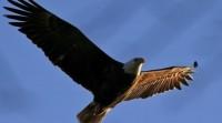 الطيور-المهيبة