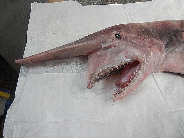 العثور على مخلوق بحري غريب ملطخ بالدماء على شاطئ أسترالي 1
