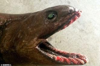 العثور على مخلوق بحري غريب ملطخ بالدماء على شاطئ أسترالي