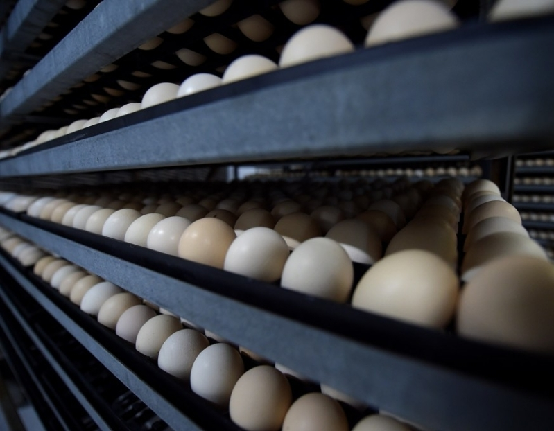 الغذاء والدواء عدم استيراد-لحوم الدجاج