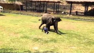 شاهد.. فيل وفي يتدخّل لإنقاذ حارسه في مشاجرة - المواطن