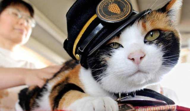 القطة-تاما-اليابان (1)