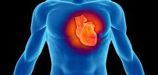 النمر محذرًا من التوتر الوظيفي: يزيد نسبة اختلال نبضات القلب