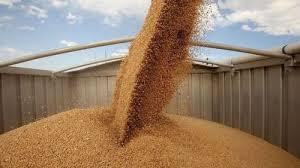 الحبوب تطرح مناقصة لاستيراد 655 ألف طن قمح - المواطن