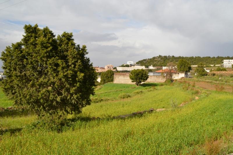 المدرجات الزراعية بعسير تُشكل لوحة جمالية بعد هطول الأمطار (105246687) 