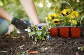 فوائد لا تعلمها لنبات المغنوليا - المواطن