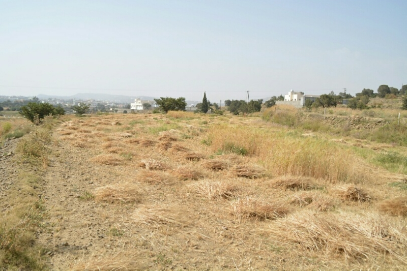 المواطن توثِّق فرحة مزارعي عسير بحصاد القمح (346807418) 