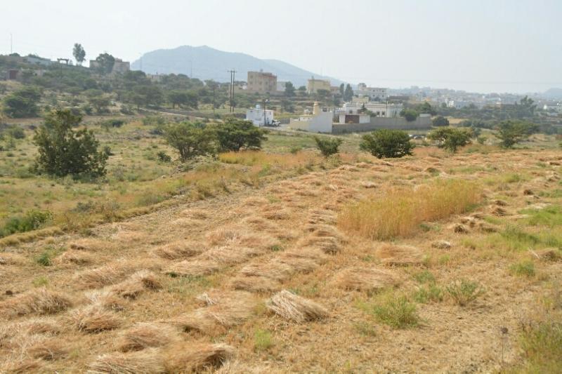 المواطن توثِّق فرحة مزارعي عسير بحصاد القمح (346807423) 