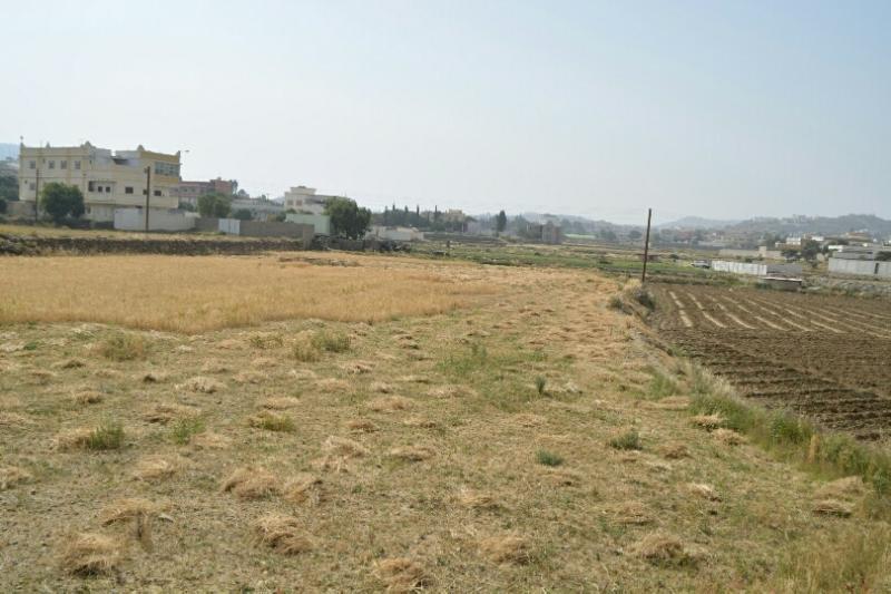 المواطن توثِّق فرحة مزارعي عسير بحصاد القمح (346807425) 