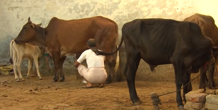 الهند اتهام 15 رجلاً بقتل مسلم لأكله لحم البقر