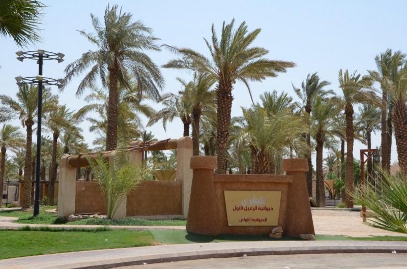 امانة-الرياض-تكرم-كبار-السن (2)