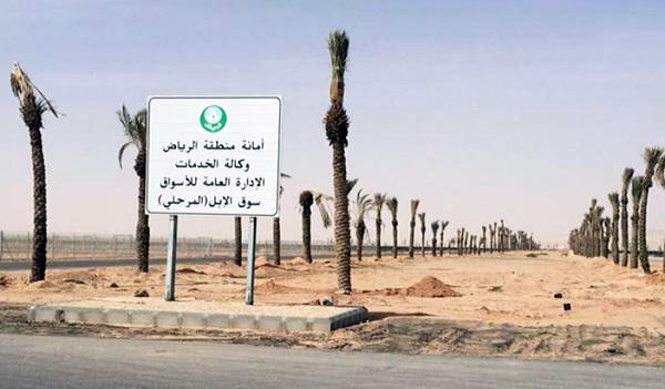امانة-الرياض-سوق-الابل