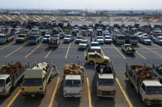 أمانة الرياض تطلب شراء الأضاحي من الأسواق المُعتمدة.. وتدعو للإبلاغ عن محاولات الغشّ - المواطن