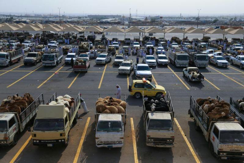 امانة منطقة الرياض تحذر من أساليب غش الأضاحي (1) 