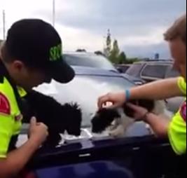 انقاذ كلبين علقا داخل سياره