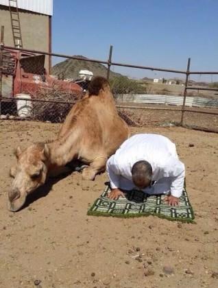 بالصور .. جمل يصلي بجانب صاحبه (1)