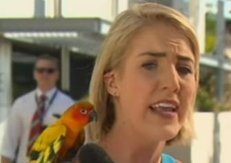 ببغاء يهاجم مراسلة قناة أسترالية على الهواء
