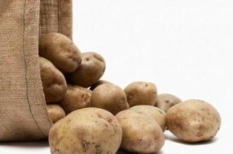 فرصة استثمارية بقيمة 120 مليون ريال لإنتاج وإكثار تقاوي البطاطس - المواطن