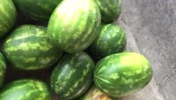 البطيخ ينشط عضلة القلب ويقلل الكوليسترول - المواطن