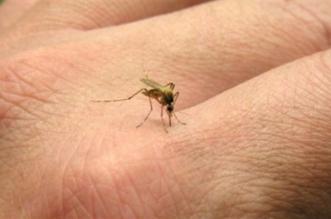مع حلول الصيف.. كيف تحمي نفسك من لدغات البعوض؟ - المواطن