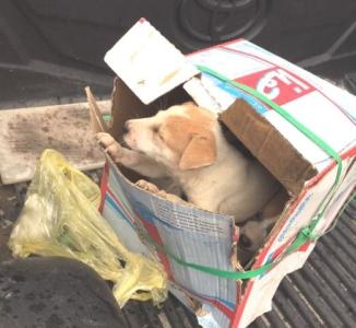 بلدية   محايل   تنفي علاقة  الكلاب بأحد محلات المندي (1)